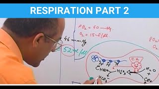 Respiration - CO2 Transport. Watch 700+ videos at https://www.DrNajeebLectures.com. Basic Medical Sciences & Clinical Medicine