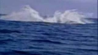 Bridport Australia  City pictures : Humpback whale near Bridport Tasmania Australia