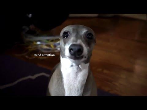 Cuty dog!
