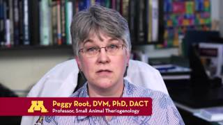 Canine Theriogenology For Dog Enthusiasts With Margaret V. Root