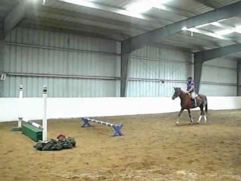SOLD --- Hunter Jumper Show Horse for Sale PA NJ September 2012 4-foot Oxer