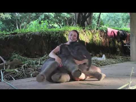 baby elefanti che sono coccoloni come cagnolini