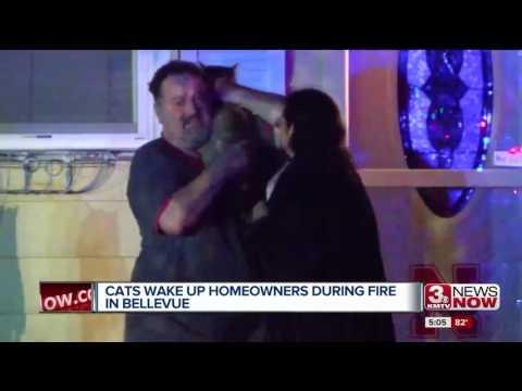 قطة يقظة تنقذ عائلة من حريق التهم منزلها ..فيديو