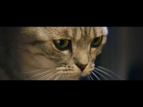 Whiskas Commercial (2016 - present) (Television Commercial)