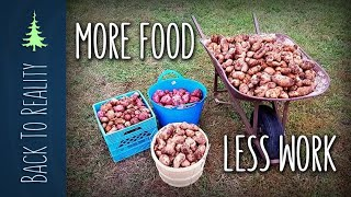 Video 337 lbs of Potatoes! NO digging, NO watering, and VERY LITTLE work! MP3, 3GP, MP4, WEBM, AVI, FLV Agustus 2019