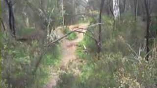 Aldgate Australia  city pictures gallery : Aldgate DH mtb Track, South Australia