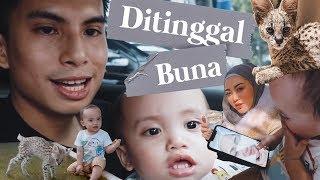 Video MEET OUR NEW FAMILY MEMBER MUEZZA THE SERVAL + DITINGGAL BUNA KE TURKI MP3, 3GP, MP4, WEBM, AVI, FLV April 2019