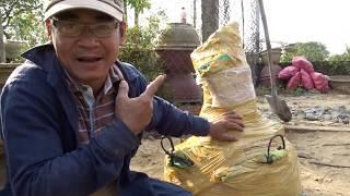Trồng cây mai từ Đất Mũi cho khách Việt Kiều