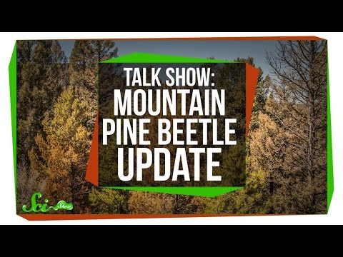 Download Mountain Pine Beetle Update: SciShow Talk Show HD Mp4 3GP Video and MP3
