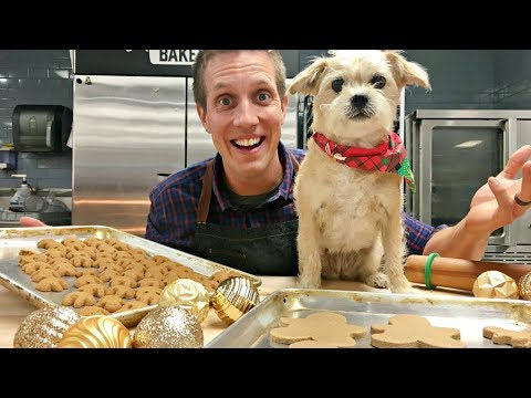 Baking Gingerbread People Dog Cookies LIVE! 🎄🐶