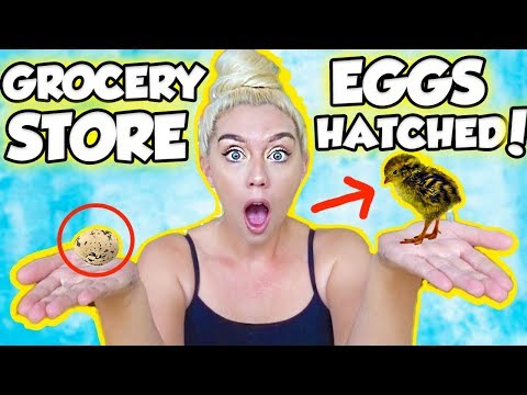 I HATCHED AN EGG FROM THE GROCERY STORE! SO SHOCKING AND AMAZING | NICOLE SKYES