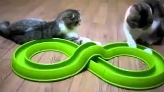 Смішні коти, Funny Cats