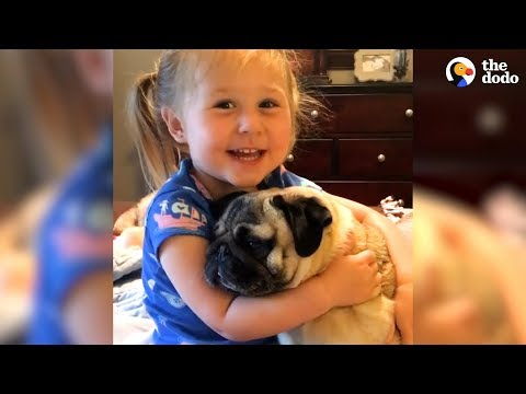 Little Girl Says The Funniest Things To Her Pugs | The Dodo