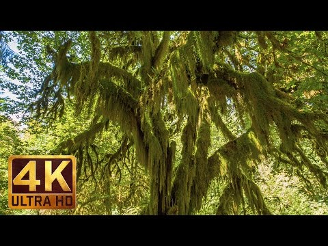 3 Hours Virtual Journey to Amazing Hoh Rain Forest in 4K | Summertime Scenery + Beautiful Music