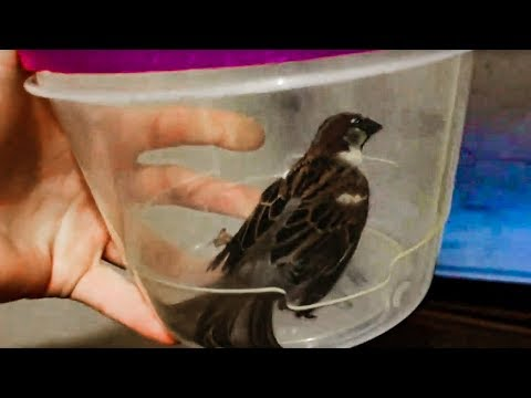 🐦There's a Bird in my House!!! (Caught & Released)