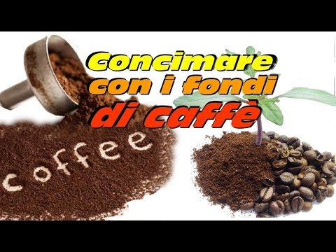 CONCIMARE CON I FONDI DEL CAFFE'