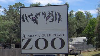 Gulf Shores (AL) United States  city photo : Alabama Gulf Coast Zoo in Gulf Shores, Alabama, United States