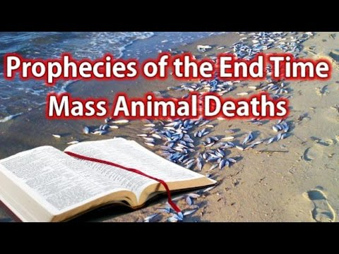 Prophecies of the End  - Mass Animal Deaths