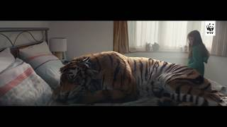 WWF-UK tiger advert 2017 🐯 An ordinary family wake up one day to find a huge tiger in their home. What magical world has it come from, and how will it ever get back?We've lost over 90% of tigers in the wild and there couldn't be a more vital time for you to become a Tiger Protector. Here's how: http://po.st/TigerInSuburbia #iProtectTigers