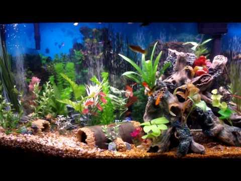 Best Fish Tank Aquarium I Ever Created - Beautiful