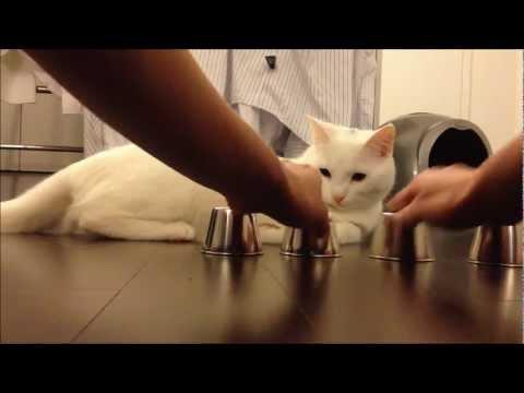 記憶力超強的小貓,太厲害了…