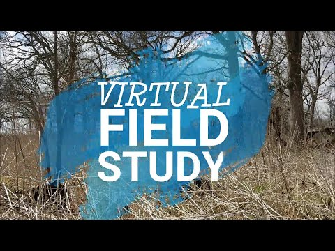 Virtual Field Study: At Home in the Woods