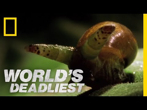 snails - World's Deadliest: Predator Superpowers : MON OCT 15 at 3P et/pt : http://animals.nationalgeographic.com/animals They don't walk... nor are they really dead....