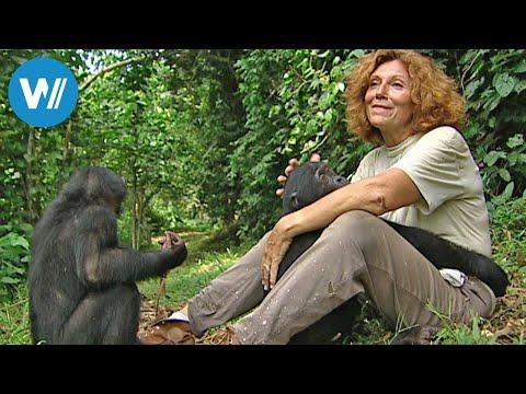 Claudine André - die Mutter der Bonobos (360° - GEO Rep ...