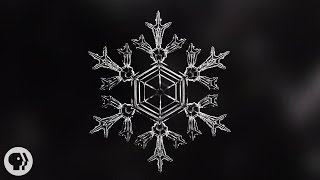 """We've all heard that each and every snowflake is unique. But in a lab in sunny southern California, a physicist has learned to control the way snowflakes grow. Can he really make twins? SUBSCRIBE to Deep Look! http://goo.gl/8NwXqtDEEP LOOK is a ultra-HD (4K) short video series created by KQED San Francisco and presented by PBS Digital Studios. See the unseen at the very edge of our visible world. Get a new perspective on our place in the universe. Explore big scientific mysteries by going incredibly small.* NEW VIDEOS EVERY OTHER TUESDAY! *California's historic drought is finally over thanks largely to a relentless parade of  powerful storms that have brought the Sierra Nevada snowpack to the highest level in six years, and guaranteed skiing into June. All that snow spurs an age-old question -- is every snowflake really unique?""""It's one of these questions that's been around forever,"""" said Ken Libbrecht, a professor of physics at the California Institute of Technology in Pasadena. """"I think we all learn it in elementary school, the old saying that no two snowflakes are alike.""""--- How do snowflakes form?Snow crystals form when humid air is cooled to the point that molecules of water vapor start sticking to each other. In the clouds, crystals usually start forming around a tiny microscopic dust particle, but if the water vapor gets cooled quickly enough the crystals can form spontaneously out of water molecules alone. Over time, more water molecules stick to the crystal until it gets heavy enough to fall.--- Why do snowflakes have six arms?Each water molecule is each made out of one oxygen atom and two hydrogen atoms. As vapor, the water molecules bounce around slamming into each other. As the vapor cools, the hydrogen atom of one molecule forms a bond with the oxygen of another water molecule. This is called a hydrogen bond. These bonds make the water molecules stick together in the shape of a hexagonal ring. As the crystal grows, more molecules join fitting within tha"""