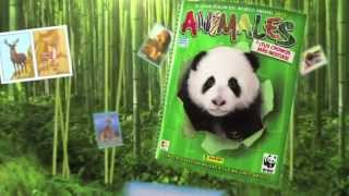 Video de Youtube de Animales 2013