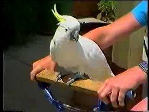 BIKE RIDING COCKATOO