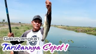 Download Video Bikin GEREGETAN !! Mancing ikan LELE Di sungai ! MP3 3GP MP4