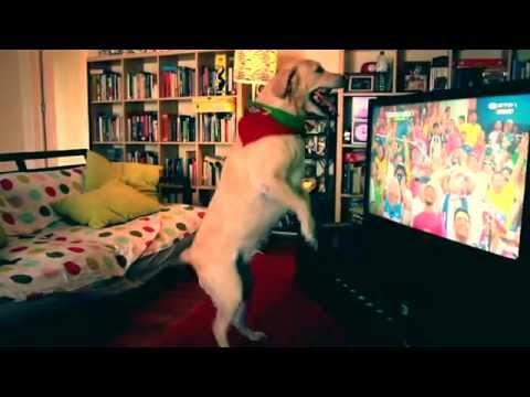 Pogledajte slavlje i tugu labradora Severa, vatrenog navijača portugalske reprezentacije