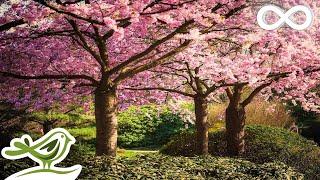 Video Beautiful Relaxing Music: Japanese Music, Chinese Music, Romantic Music, Meditation Music ★106 MP3, 3GP, MP4, WEBM, AVI, FLV Juni 2018