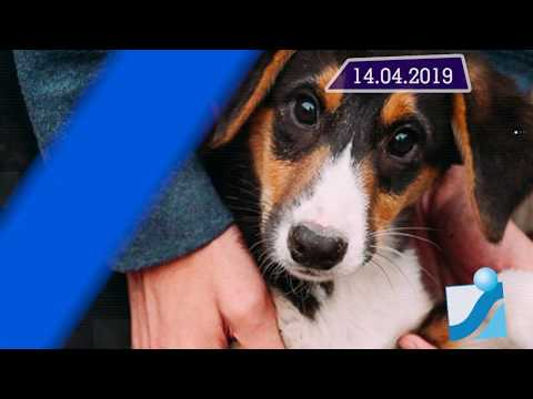 Новостная лента Телеканала Интекс 14.04.19.