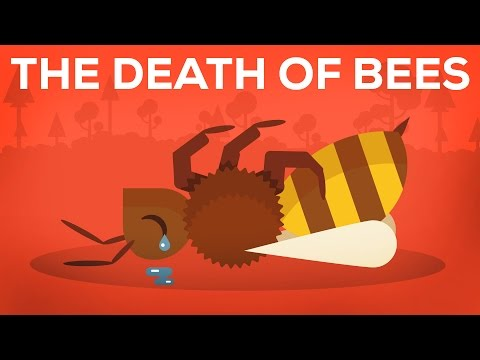 The Death Of Bees Explained Parasites Poison and