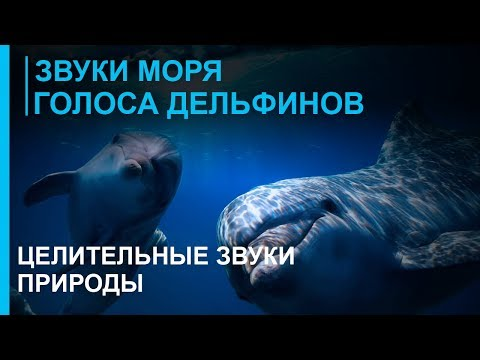 Дельфины скачать mp3