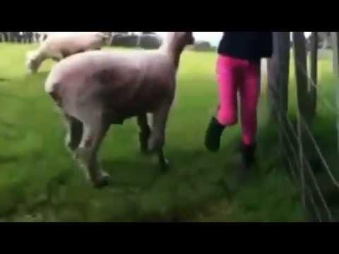 فيديو مضحك لبنت في ورطه