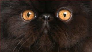 Nonton CATS Film Subtitle Indonesia Streaming Movie Download