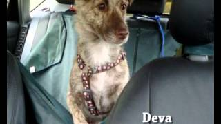 """Some incredible stray-dogs from Romania adopted abroad and a beautiful song of hope and joy by """"Hymns from Nineveh""""."""