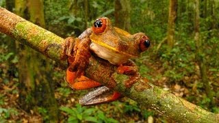 From legless lizards to purring monkeys, scientists described thousands of unique animal species in 2013. Some species-rich regions like the Amazon basin ...