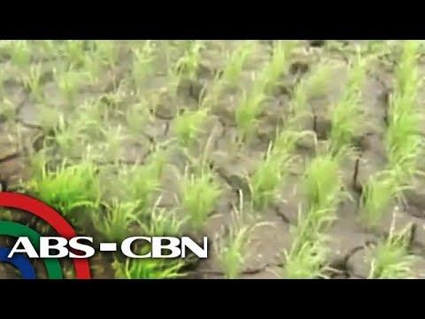 El Niño to affect food supply