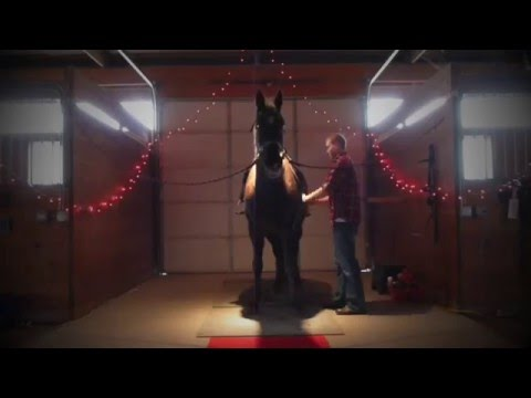 horse - This is a compilation of the 2 hours leading up to and including my proposal to my now fiancée, condensed down into a short 10 minute video. Because Megan ha...