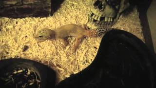 Exotic Pet Room Update&Description Of Animals