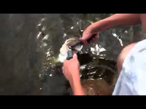 Bass Fishing Ponds Part 4/4