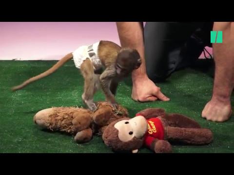 Cute Baby Animals Meet Their Stuffed Counterparts