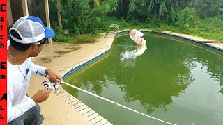 Video SAVING FISH in ABANDONED SWIMMING POOL! Fishing them Out MP3, 3GP, MP4, WEBM, AVI, FLV Agustus 2019