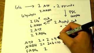 MCAT Question Of The Day 2 Biology Respiration