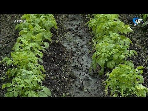В региональном министерстве сельского хозяйства обсудили подготовку к посевной кампании