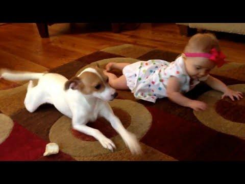 Crawling - During baby crawling school, Professor Buddy the dog teaches his subject the most basic subject of his course, How to Crawl 101! Original Link: https://www.y...